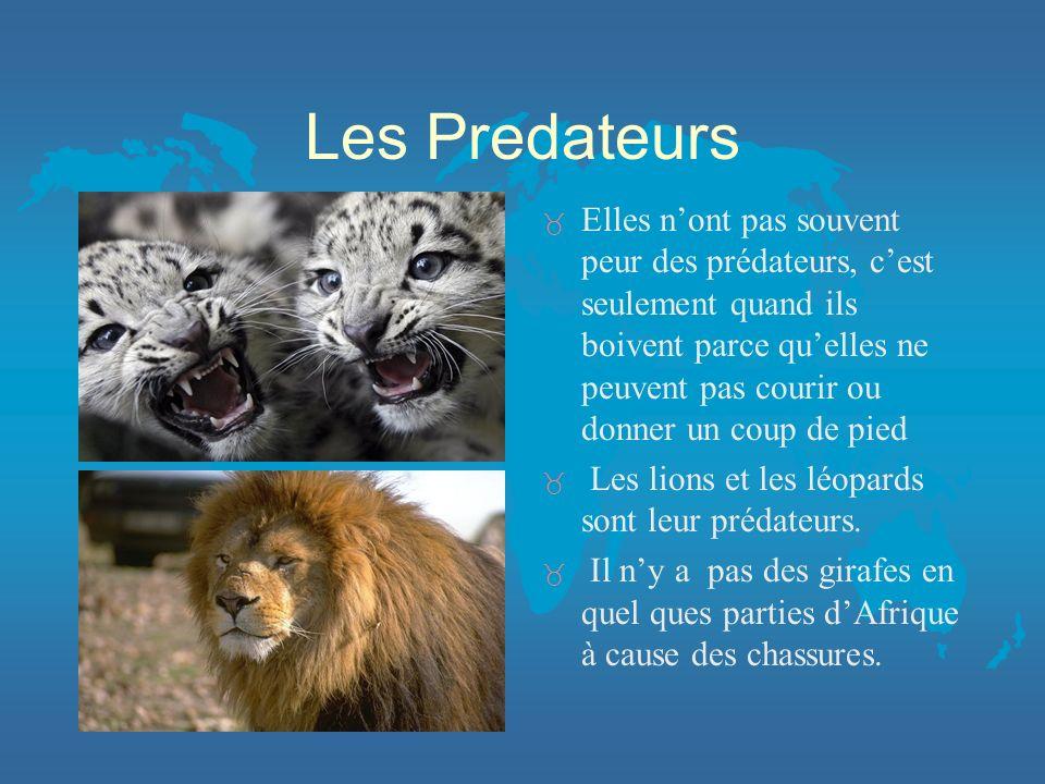 Les Predateurs