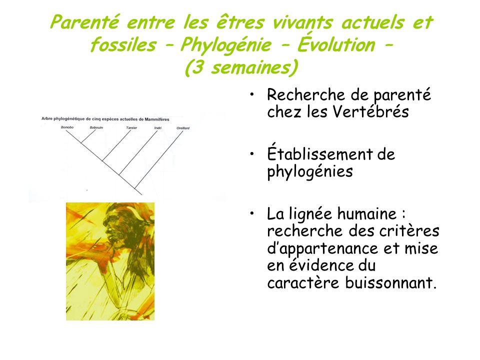 Parenté entre les êtres vivants actuels et fossiles – Phylogénie – Évolution – (3 semaines)