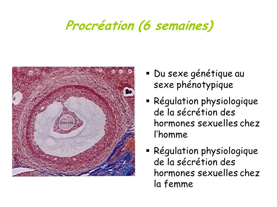 Procréation (6 semaines)