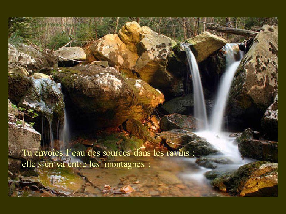 Tu envoies l'eau des sources dans les ravins : elle s'en va entre les montagnes ;