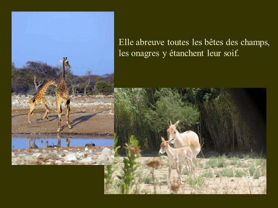 Elle abreuve toutes les bêtes des champs, les onagres y étanchent leur soif.