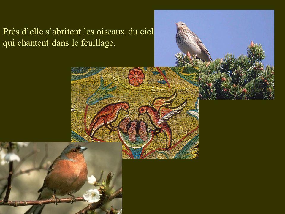 Près d'elle s'abritent les oiseaux du ciel qui chantent dans le feuillage.
