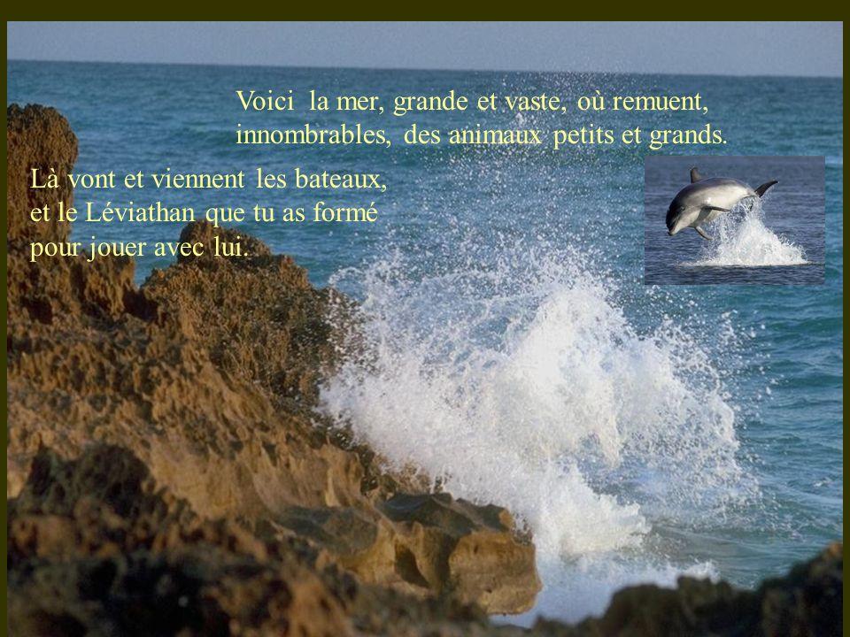 Voici la mer, grande et vaste, où remuent, innombrables, des animaux petits et grands.