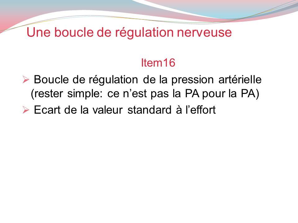 Une boucle de régulation nerveuse