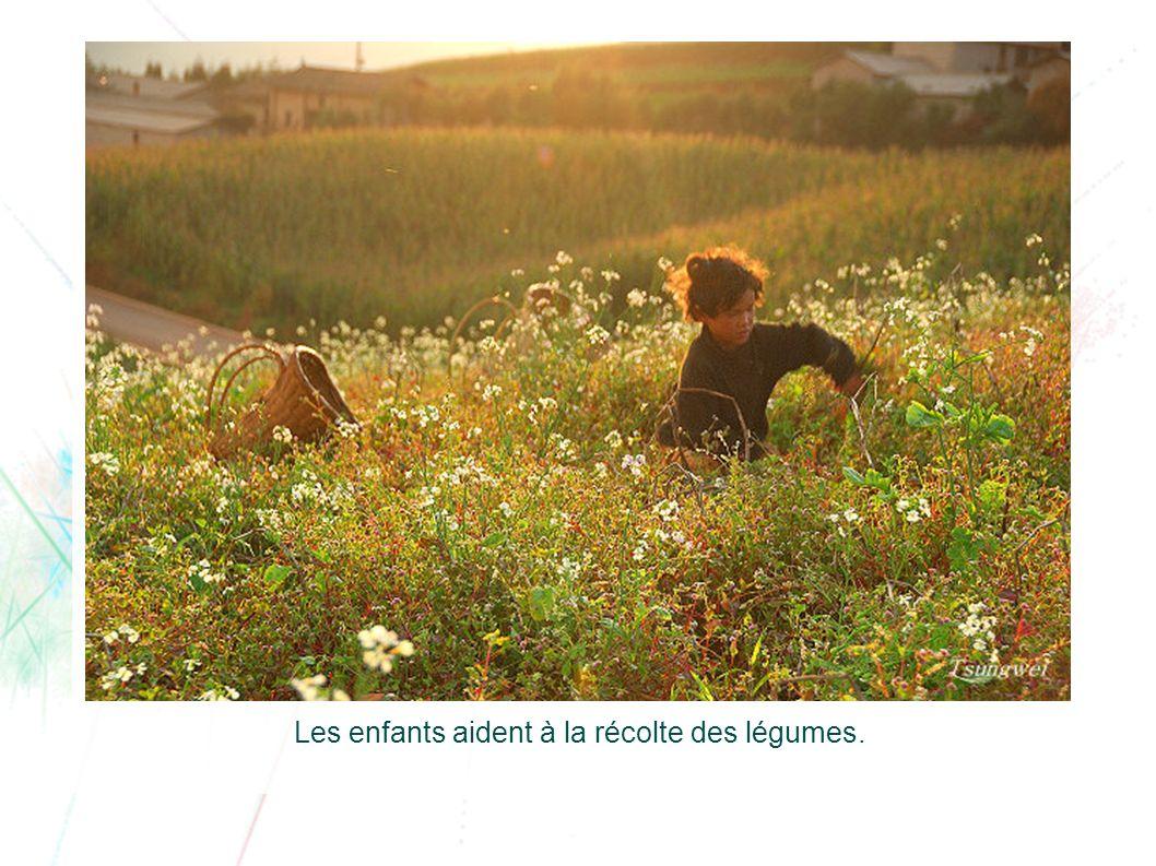 Les enfants aident à la récolte des légumes.