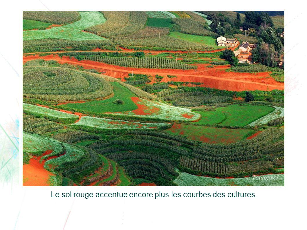 Le sol rouge accentue encore plus les courbes des cultures.