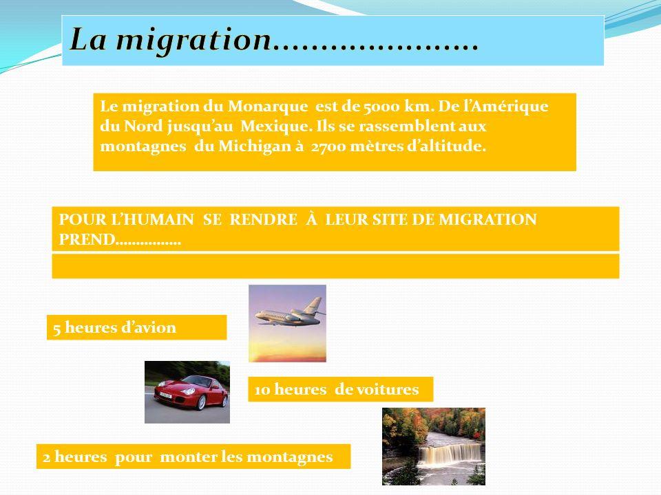 La migration......................