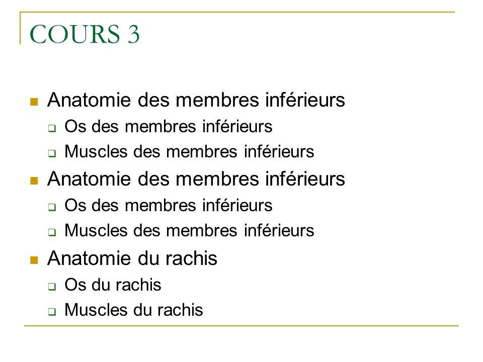 COURS 3 Anatomie des membres inférieurs Anatomie du rachis