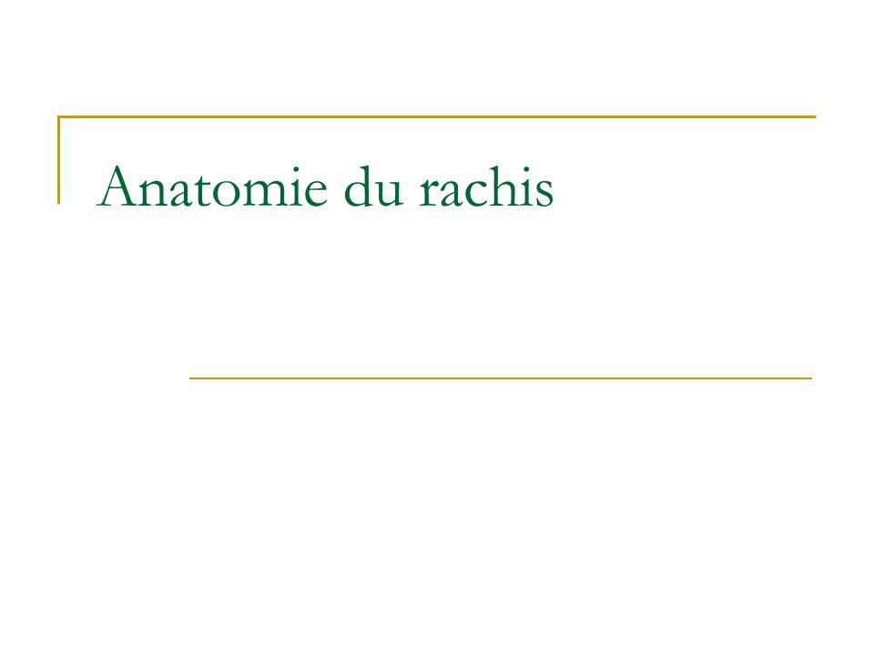 Anatomie du rachis