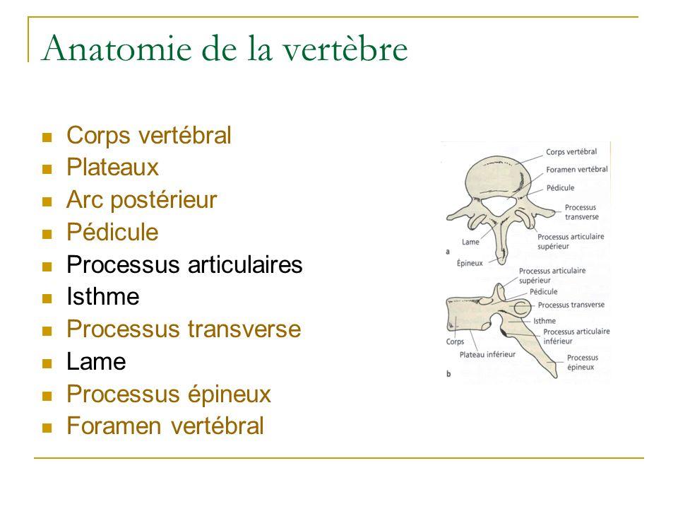 Anatomie de la vertèbre