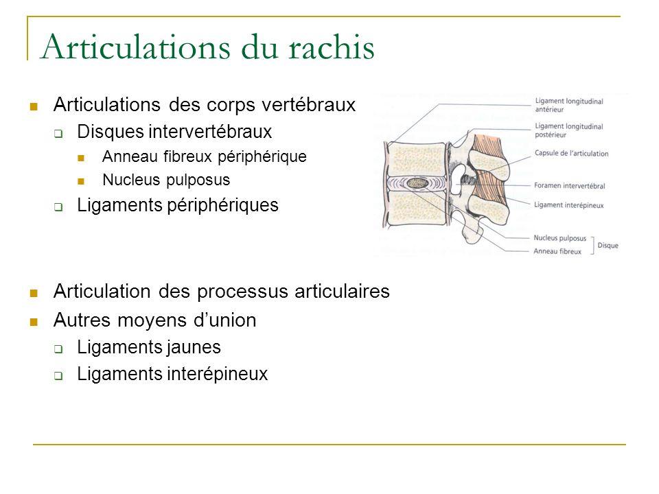Articulations du rachis