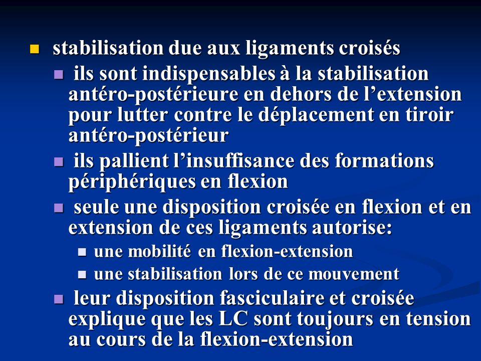 stabilisation due aux ligaments croisés