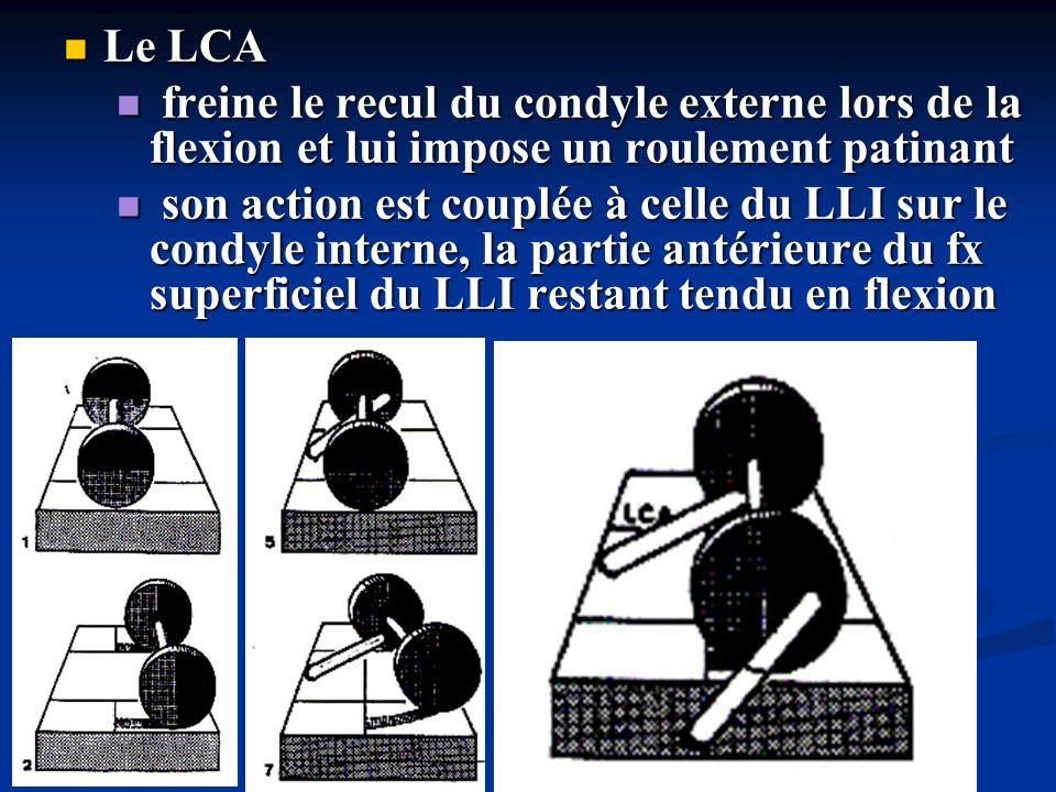 Le LCA freine le recul du condyle externe lors de la flexion et lui impose un roulement patinant.