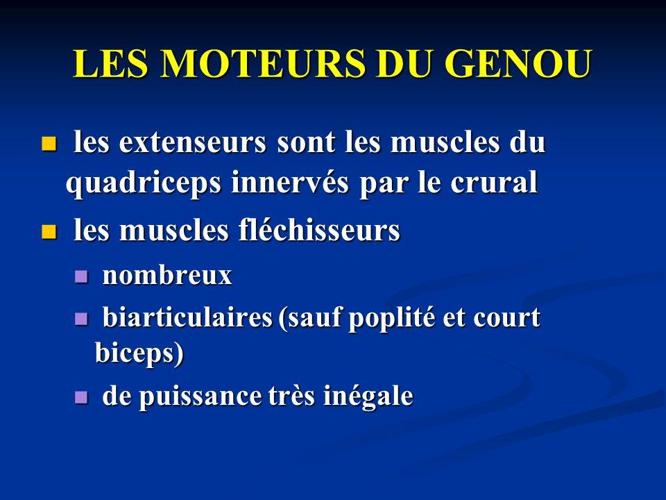 LES MOTEURS DU GENOU les extenseurs sont les muscles du quadriceps innervés par le crural. les muscles fléchisseurs.
