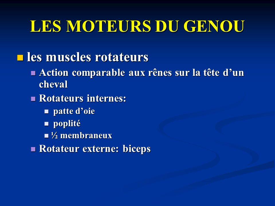 LES MOTEURS DU GENOU les muscles rotateurs