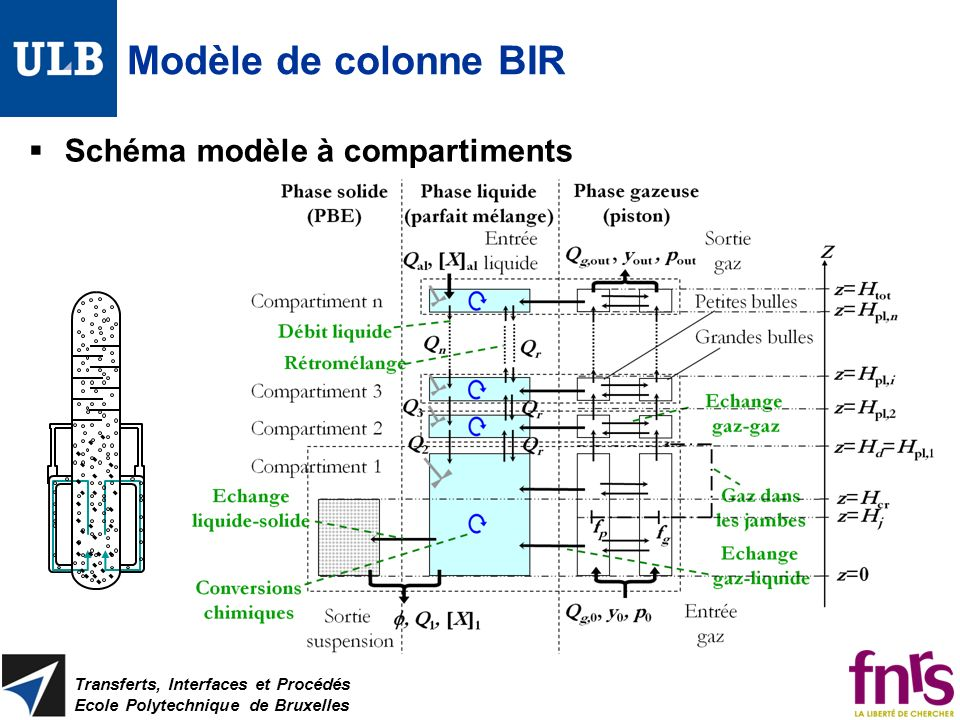 Modèle de colonne BIR Schéma modèle à compartiments