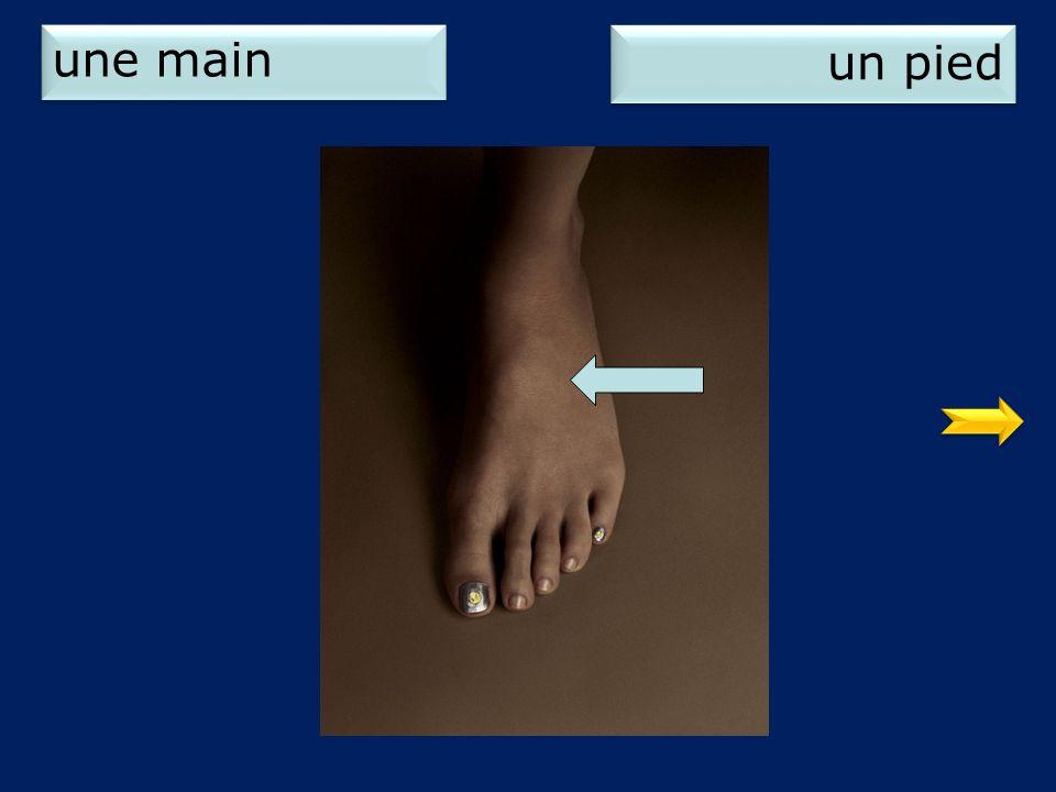 une main un pied 2