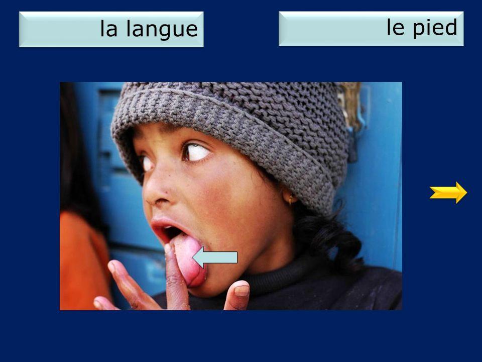 la langue le pied 1