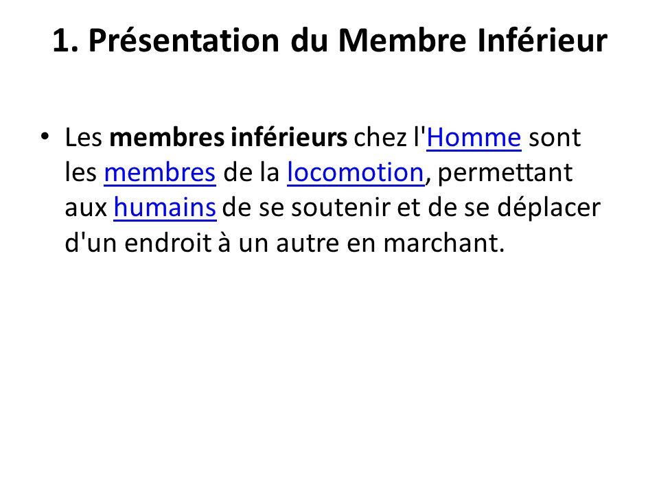 1. Présentation du Membre Inférieur
