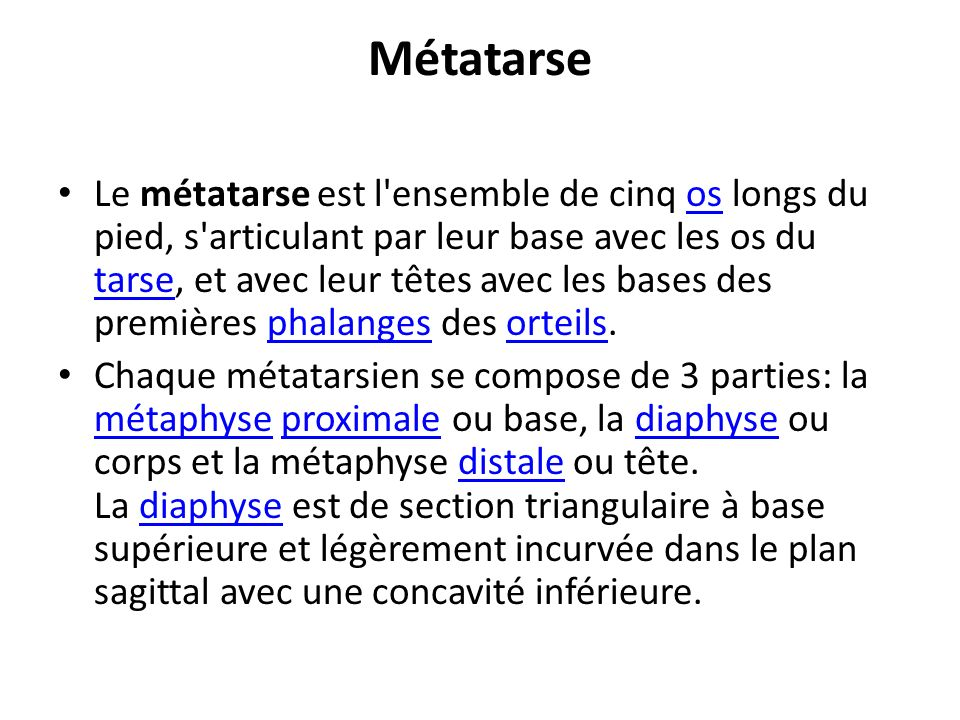 Métatarse