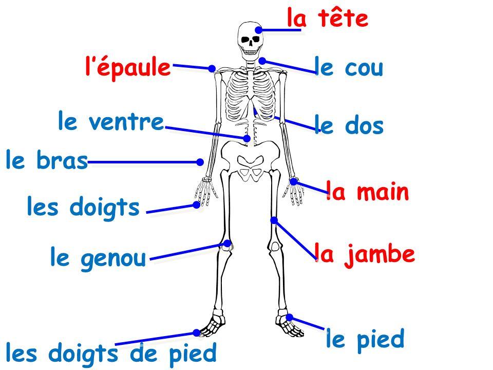 la tête l'épaule. le cou. le ventre. le dos. le bras. la main. les doigts. la jambe. le genou.