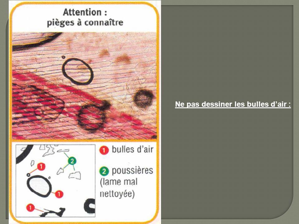 Ne pas dessiner les bulles d'air :