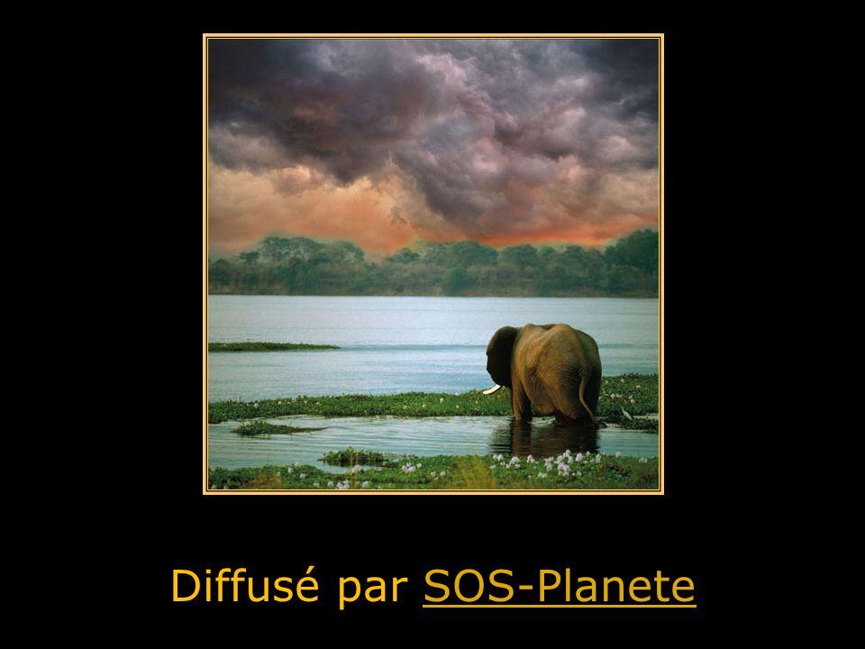 Diffusé par SOS-Planete
