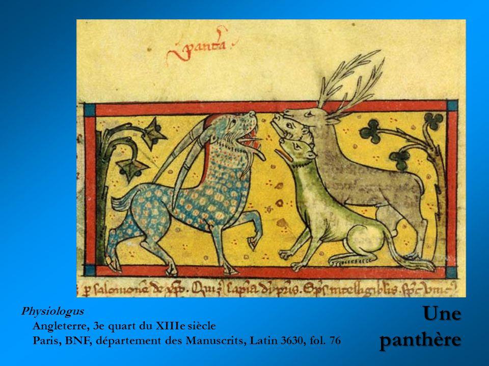 Une panthère Physiologus Angleterre, 3e quart du XIIIe siècle