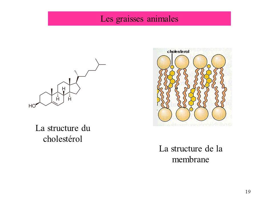 La structure du cholestérol