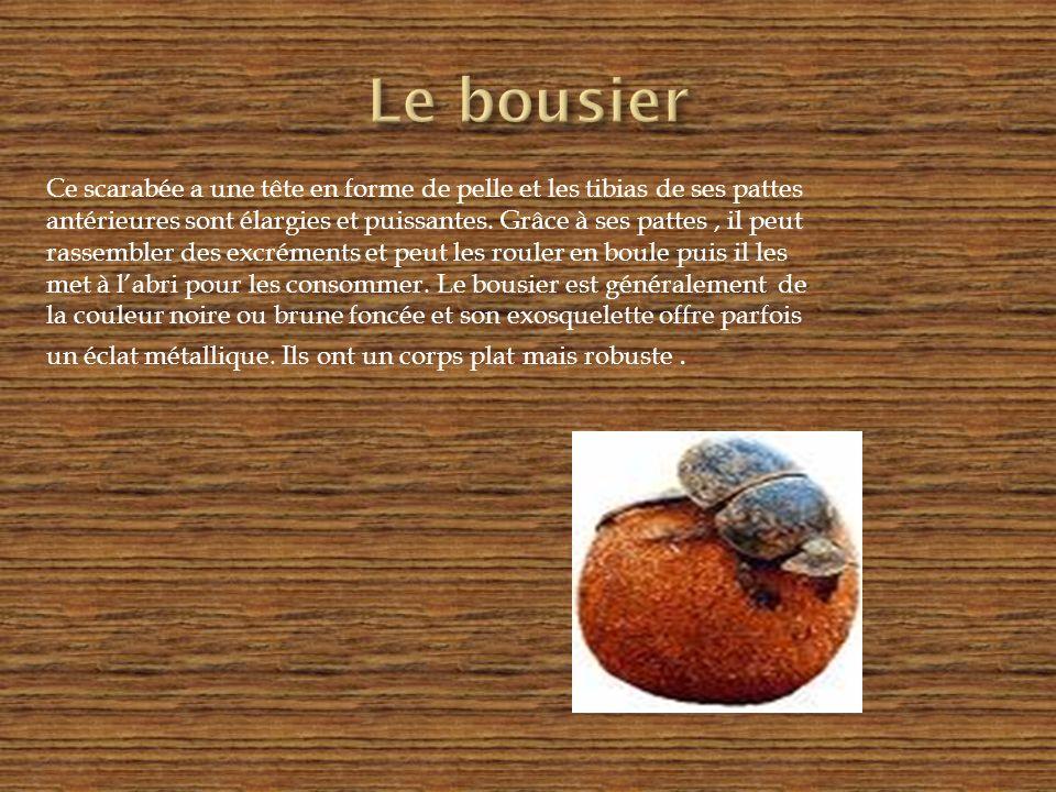 Le bousier