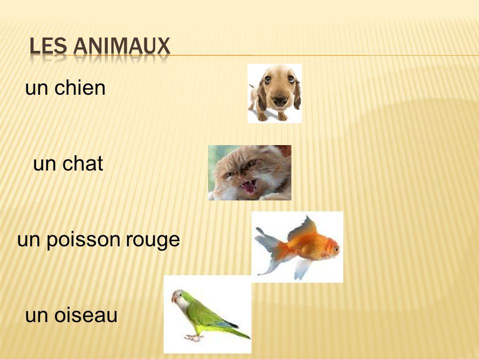 Les animaux un chien un chat un poisson rouge un oiseau