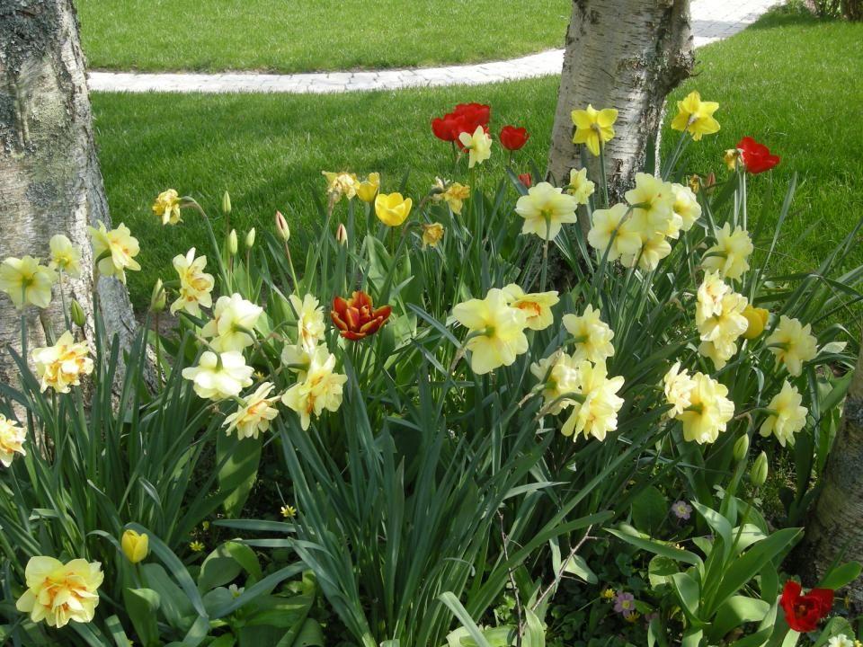 En 2009, dernière criée à Lesconil Après l'hiver , le printemps