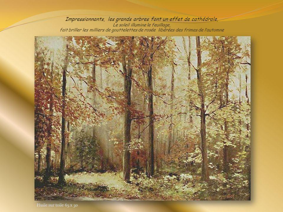 Impressionnants, les grands arbres font un effet de cathédrale, Le soleil illumine le feuillage, fait briller les milliers de gouttelettes de rosée libérées des frimas de l'automne