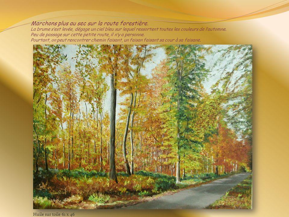 Marchons plus au sec sur la route forestière
