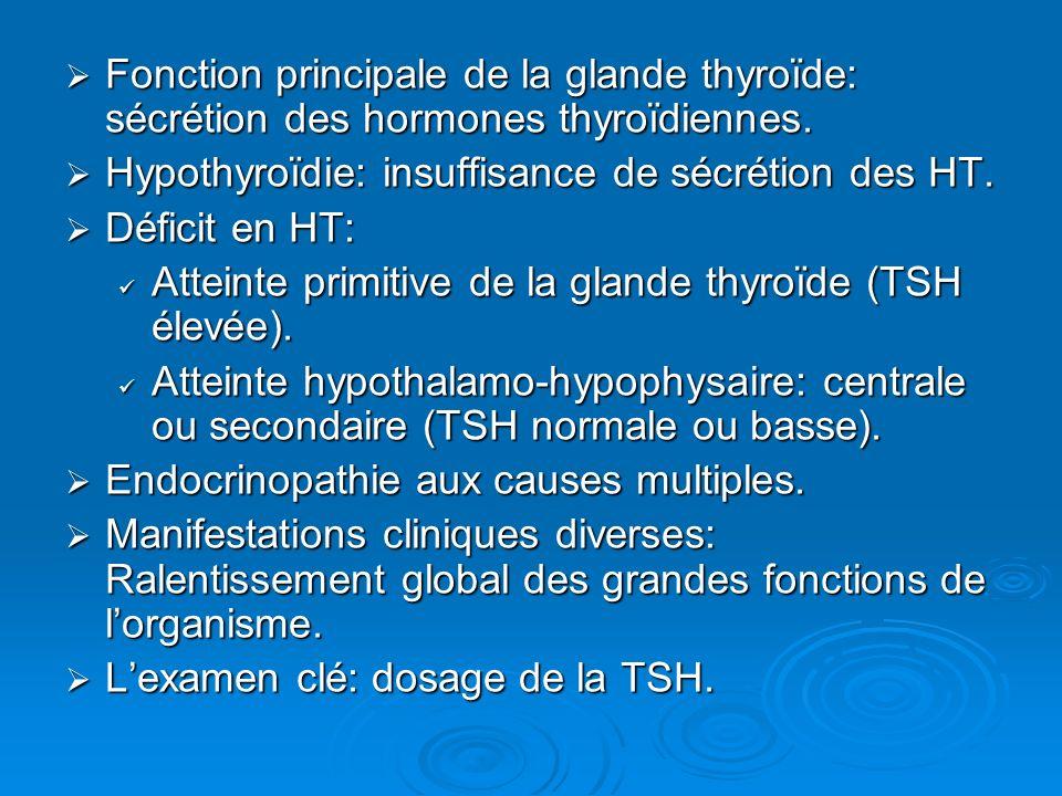 Fonction principale de la glande thyroïde: sécrétion des hormones thyroïdiennes.