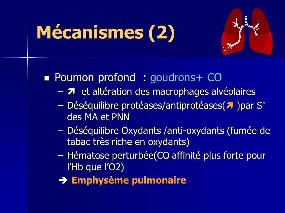 Mécanismes (2) Poumon profond : goudrons+ CO