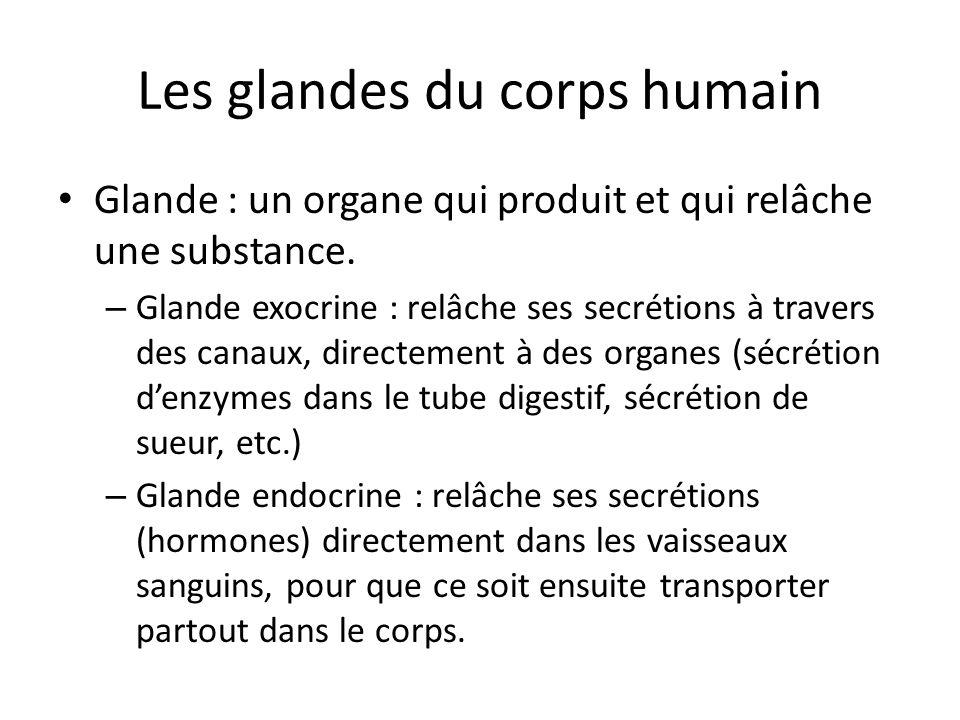 Les glandes du corps humain