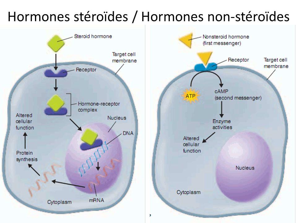 Hormones stéroïdes / Hormones non-stéroïdes