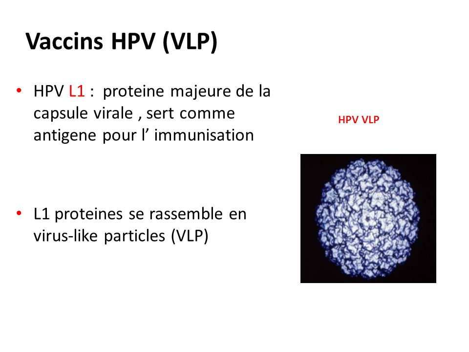 Vaccins HPV (VLP) HPV L1 : proteine majeure de la capsule virale , sert comme antigene pour l' immunisation.