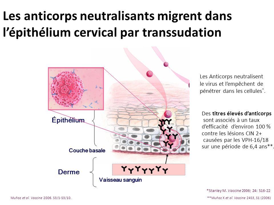 Les anticorps neutralisants migrent dans l'épithélium cervical par transsudation