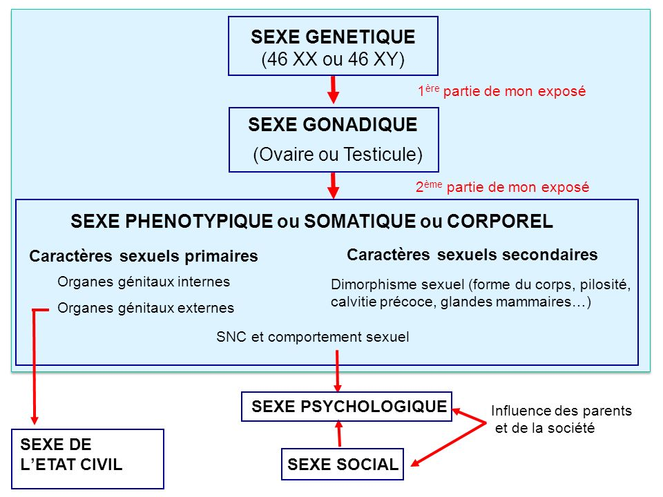 SEXE PHENOTYPIQUE ou SOMATIQUE ou CORPOREL