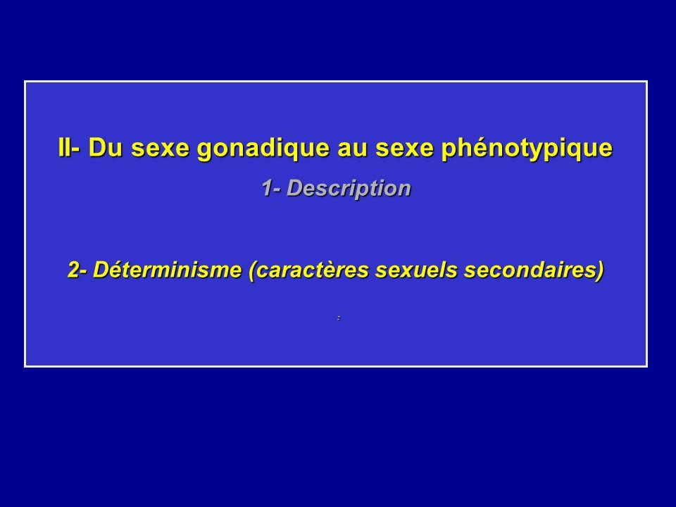 II- Du sexe gonadique au sexe phénotypique