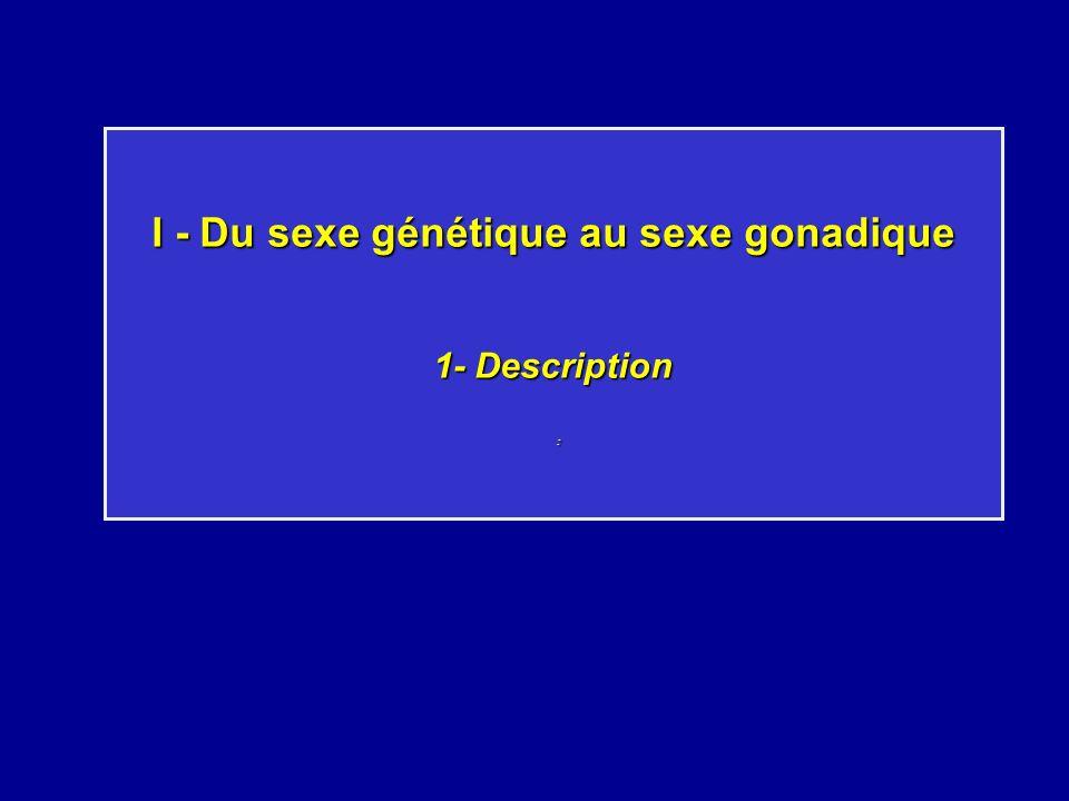 I - Du sexe génétique au sexe gonadique