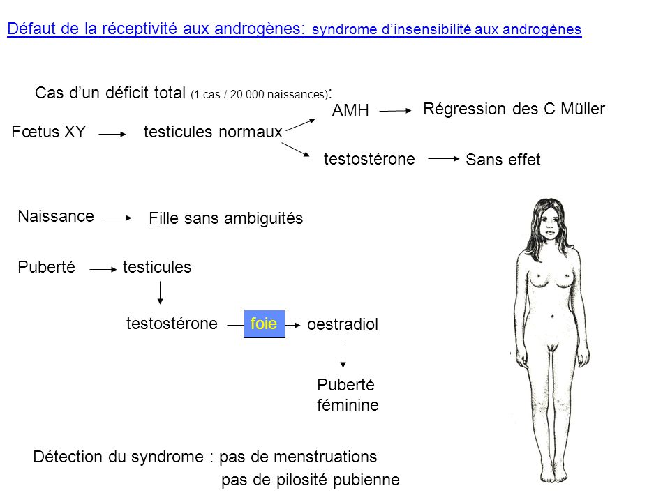 Défaut de la réceptivité aux androgènes: syndrome d'insensibilité aux androgènes