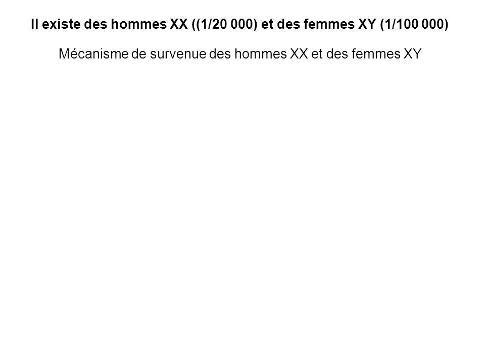 Il existe des hommes XX ((1/20 000) et des femmes XY (1/100 000)