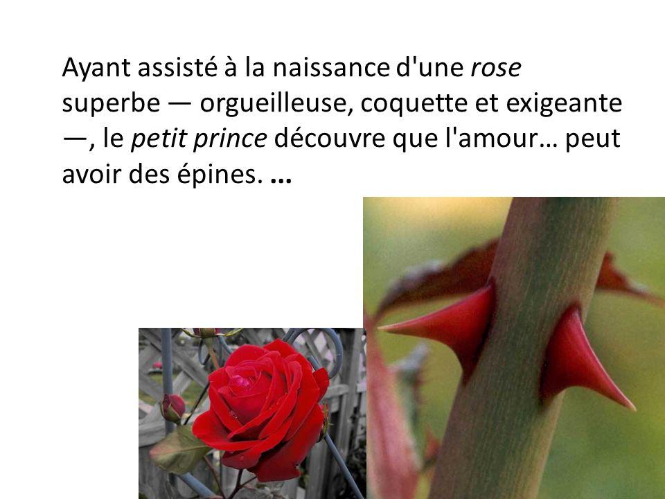 Ayant assisté à la naissance d une rose superbe — orgueilleuse, coquette et exigeante —, le petit prince découvre que l amour… peut avoir des épines.