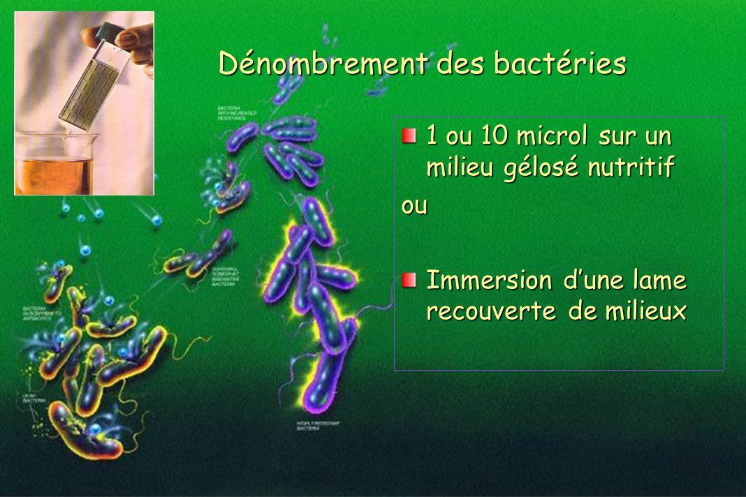 Dénombrement des bactéries