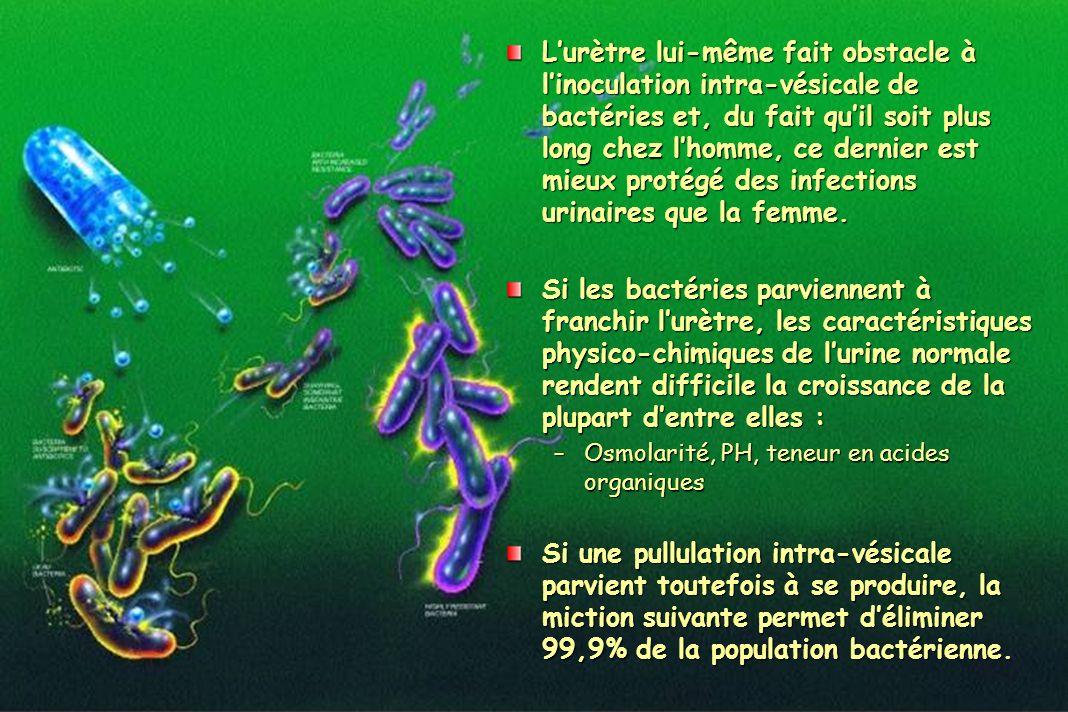 L'urètre lui-même fait obstacle à l'inoculation intra-vésicale de bactéries et, du fait qu'il soit plus long chez l'homme, ce dernier est mieux protégé des infections urinaires que la femme.