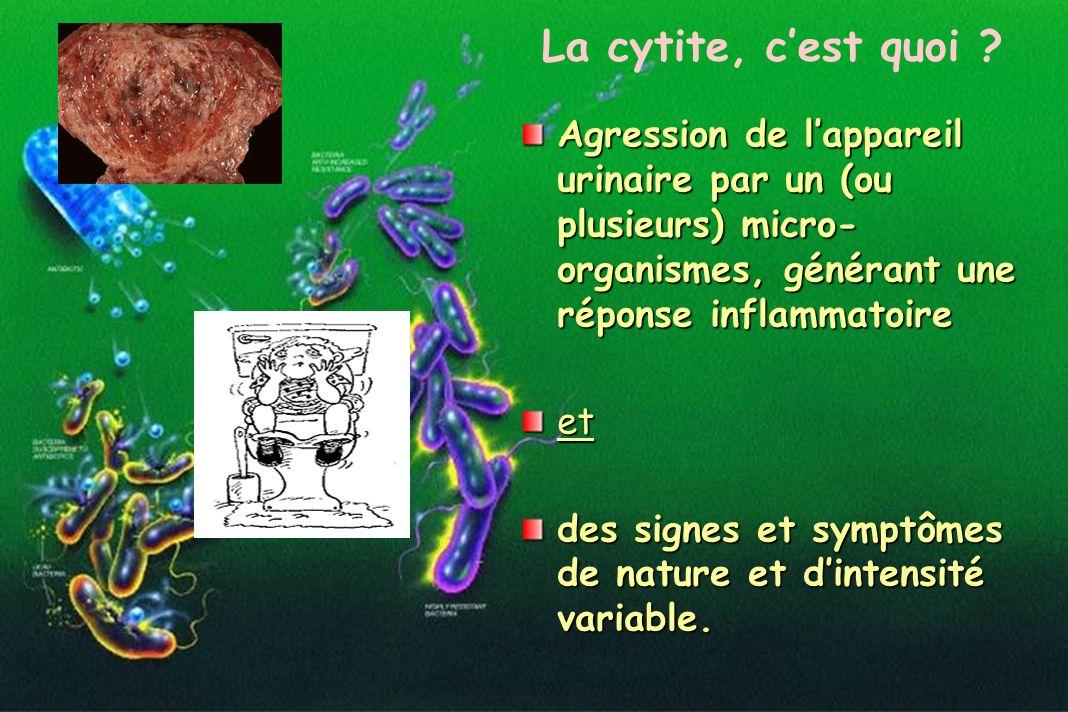 La cytite, c'est quoi Agression de l'appareil urinaire par un (ou plusieurs) micro-organismes, générant une réponse inflammatoire.