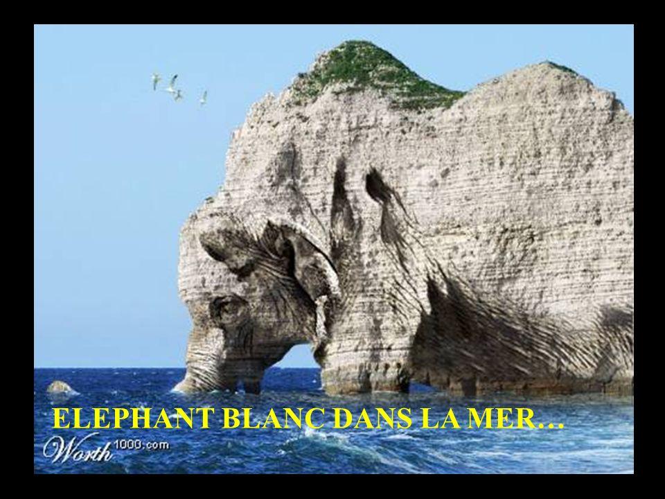 ELEPHANT BLANC DANS LA MER…